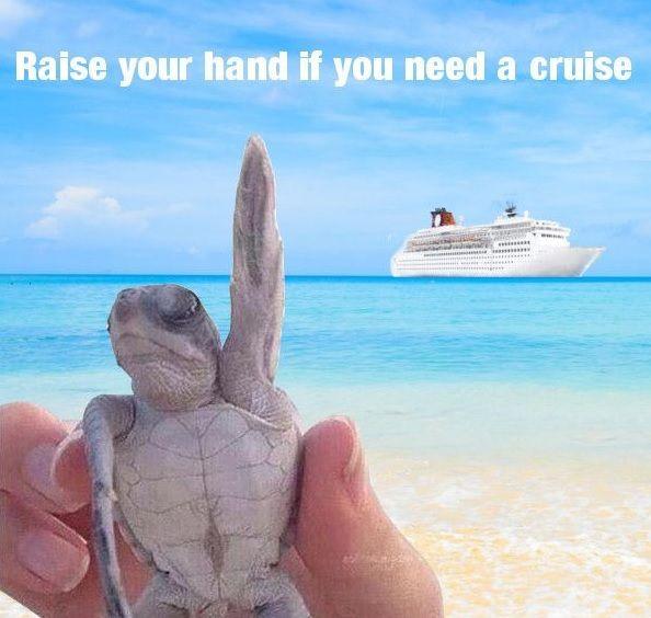 AHA Cruise Crew 2019