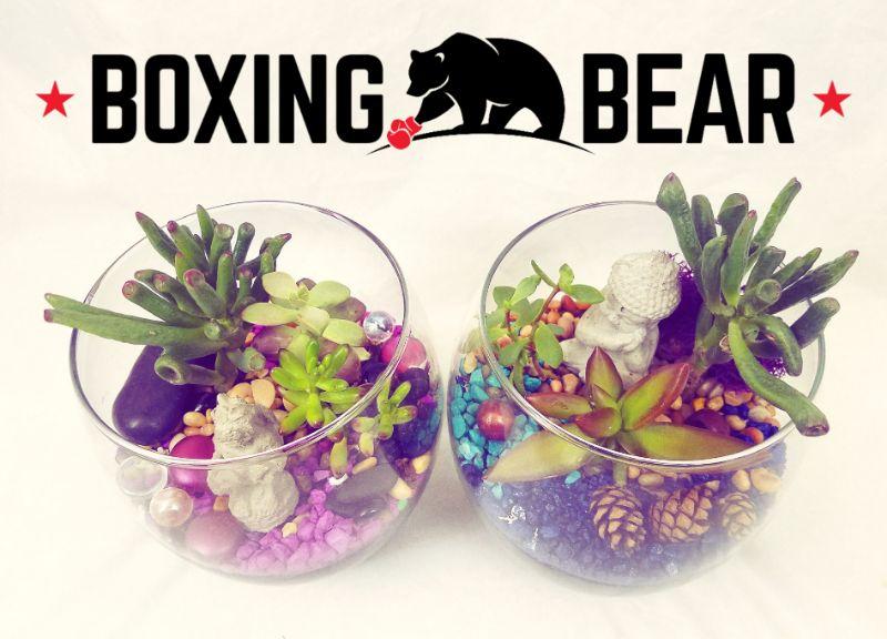 8:00 pm - Make Classic Terrariums at Boxing Bear Brewing