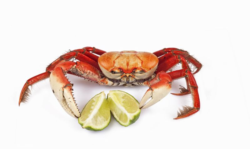 Crab Feed 2020
