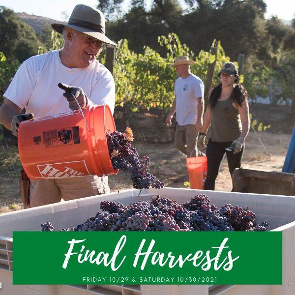 Ramona Ranch Wine Grape Harvest - Cabernet Friday 10/29