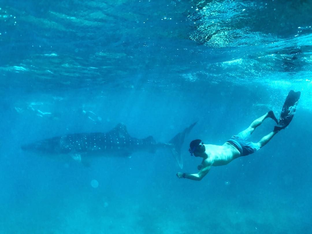 PJ Manning swimming in ocean with whale shark