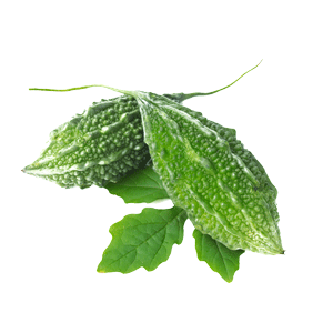 Indian Bitter Melon