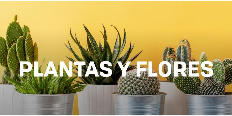 plantas-y-flores