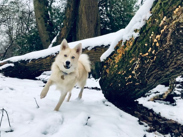 Pan enjoying the snow