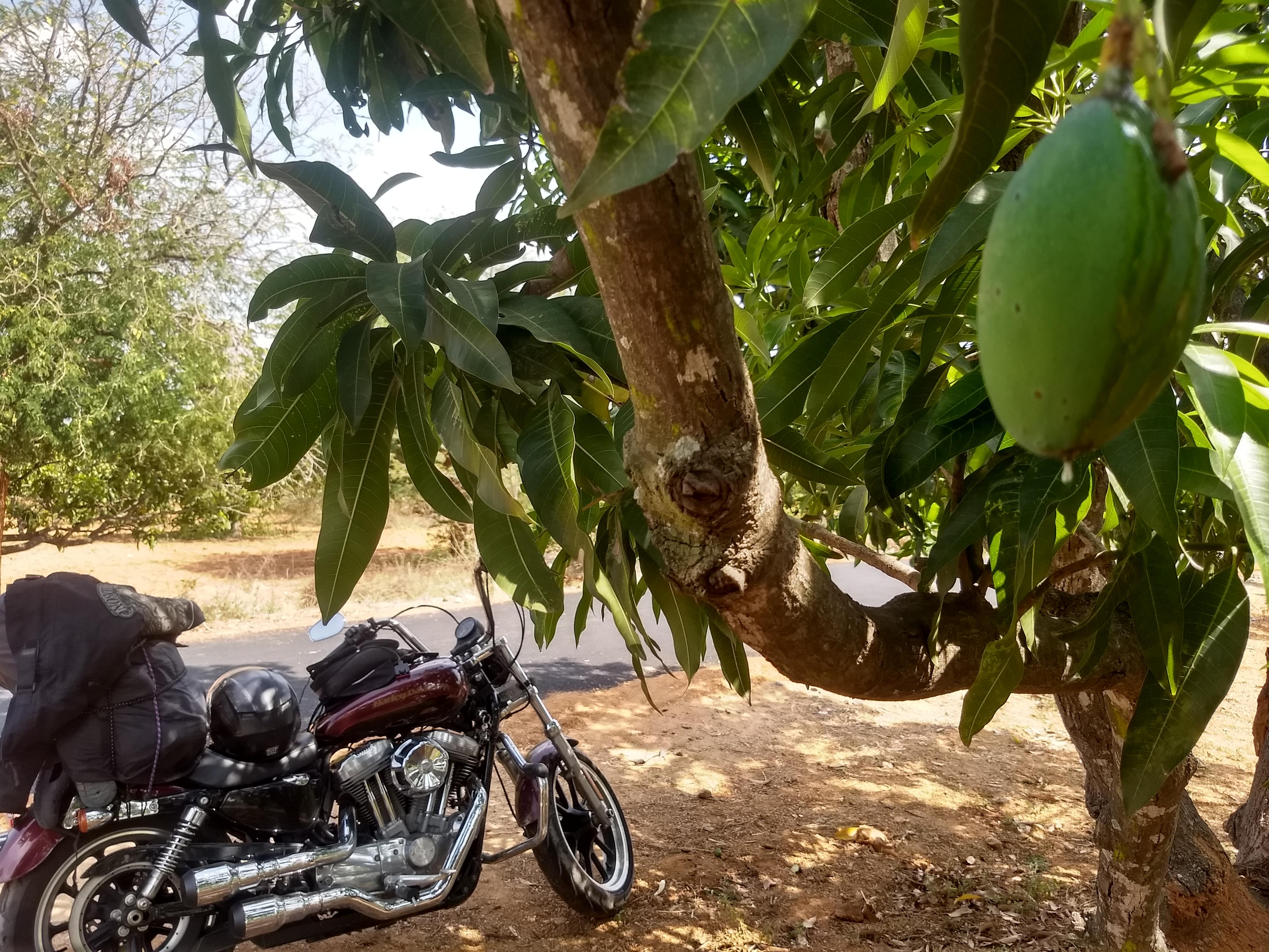 Ride Image by Vikram Bhaskaran