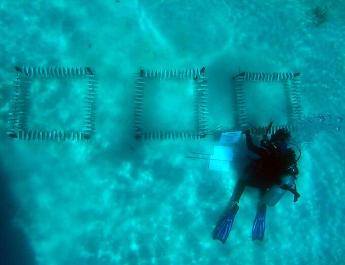 A diver inspects recruitment tiles, Vlasoff Reef