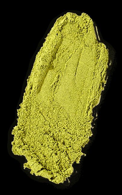 Sophora Japonica