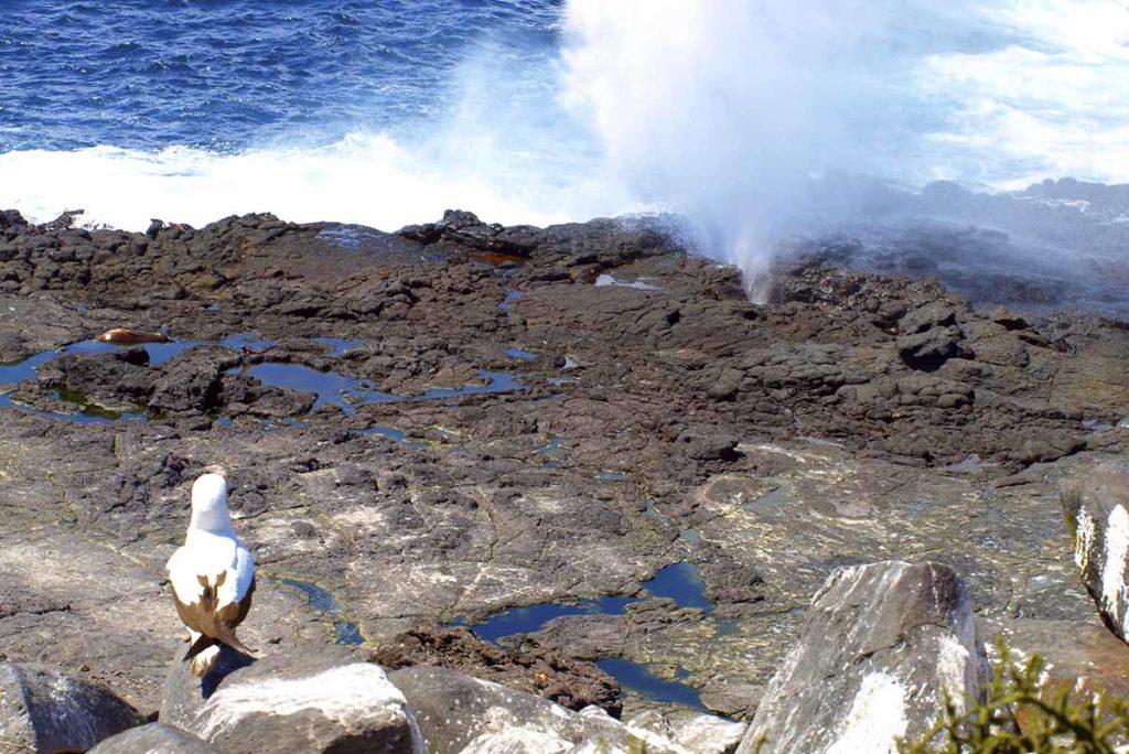 Punta Suarez - Islas Galápagos