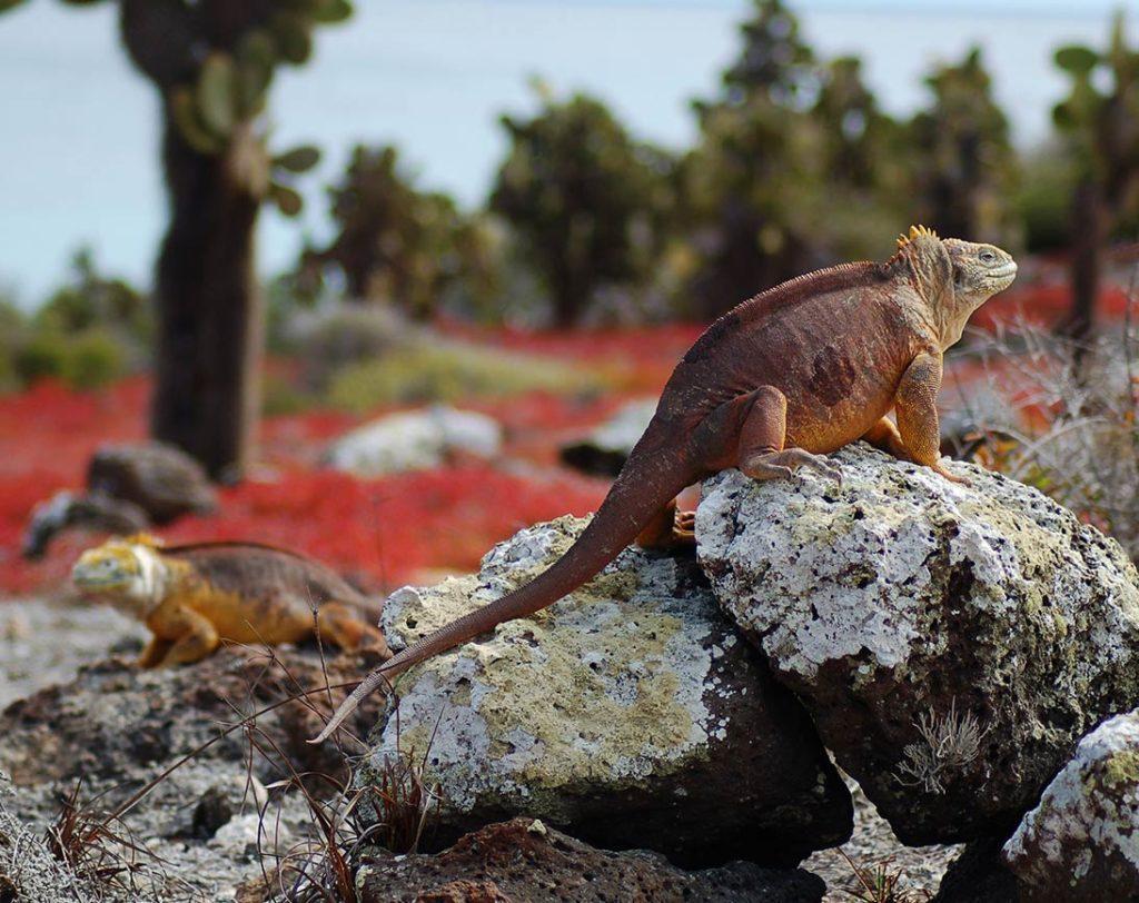 Plazas Sur - Islas Galápagos