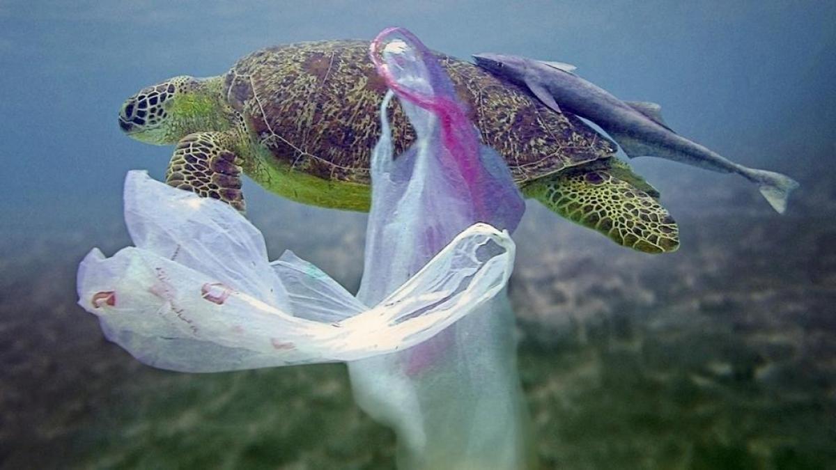 Galapagos sea turtle   Plastic pollution