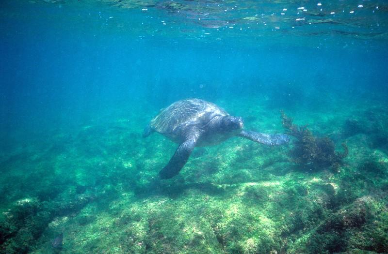 Galapagos islands blog