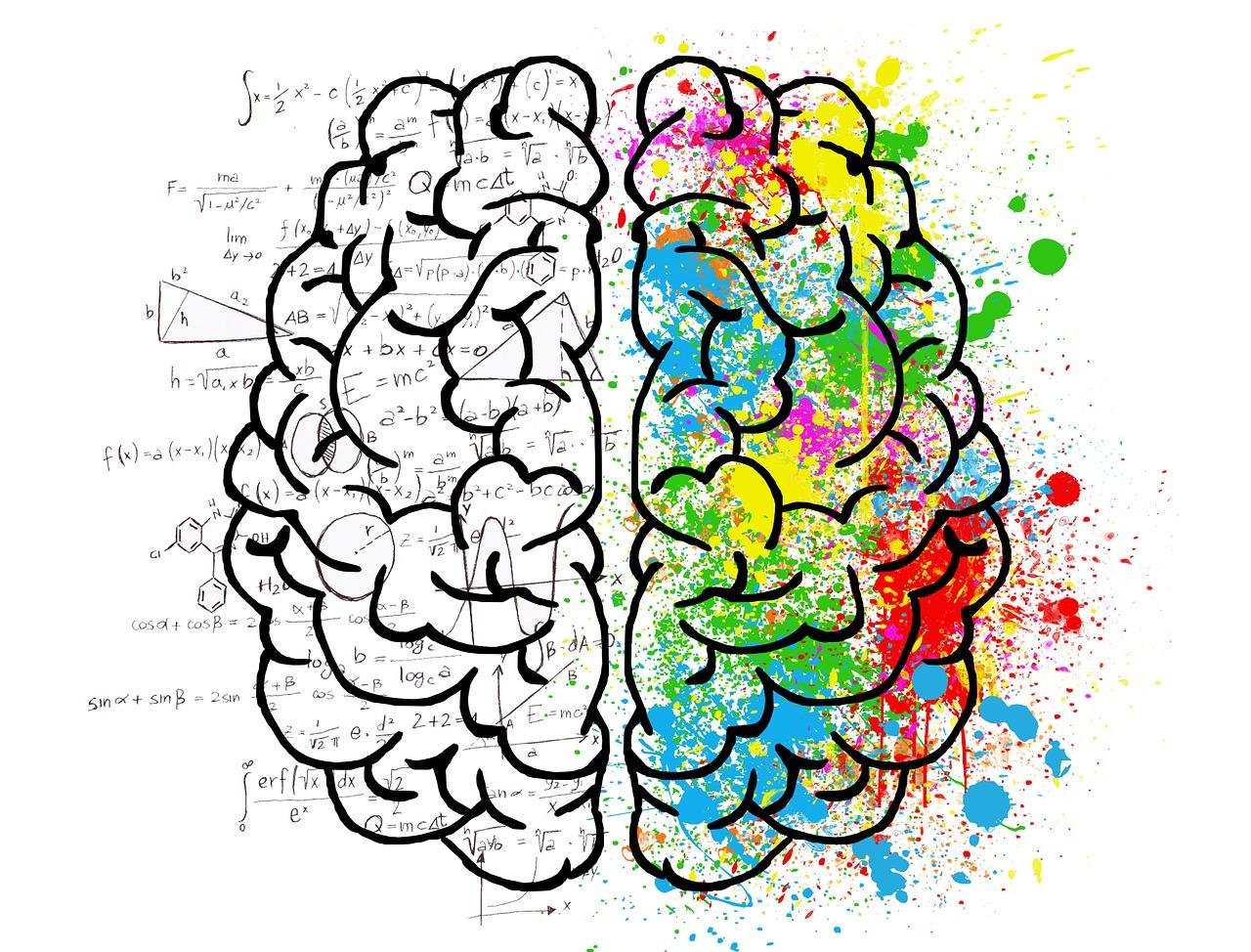 ¡Falsas creencias a propósito del cerebro, pero verdaderos neuromitos!
