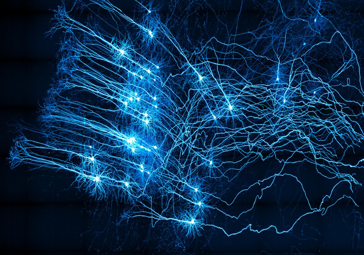 Las neuronas en medio de nuestra reflexión