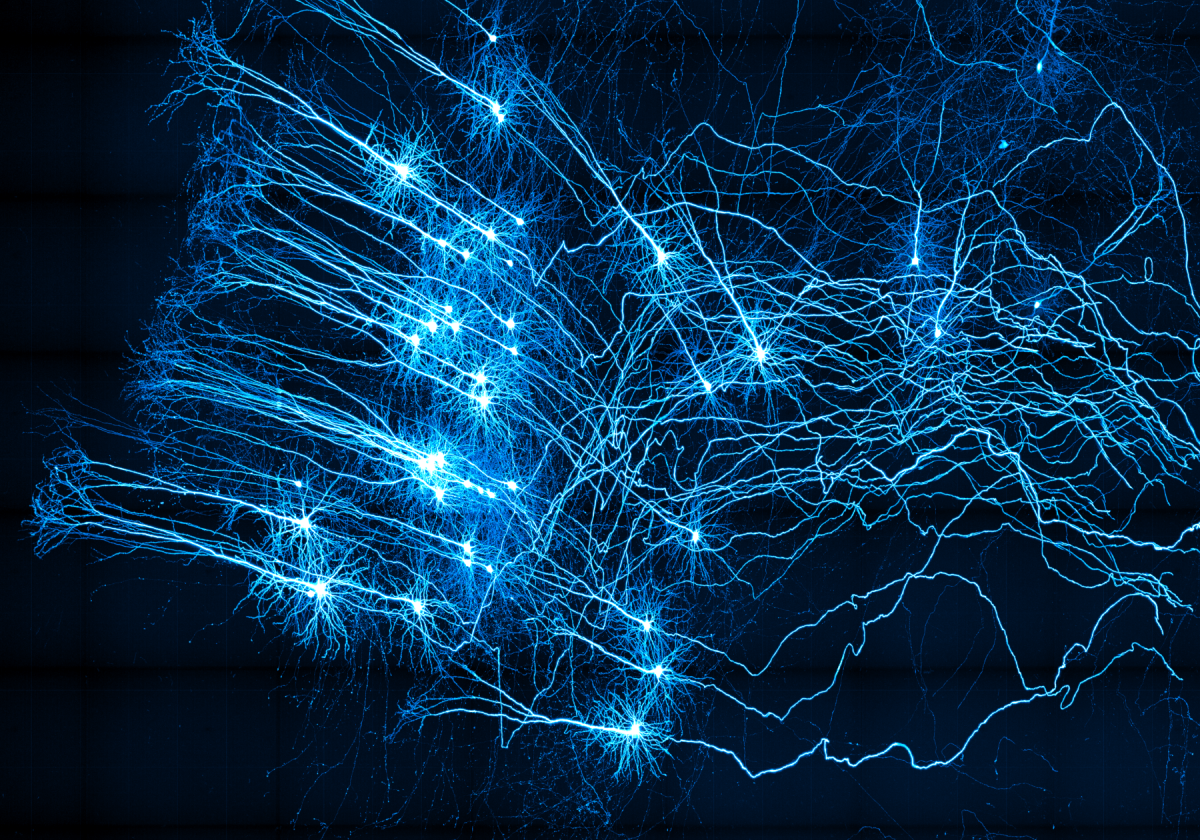 Neurons at the center of our thoughts
