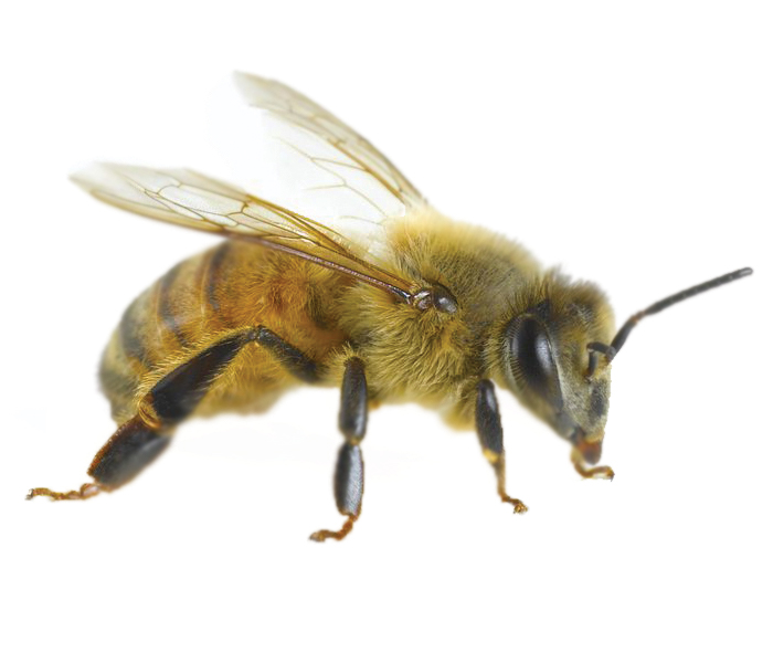 The art of communication for our bees
