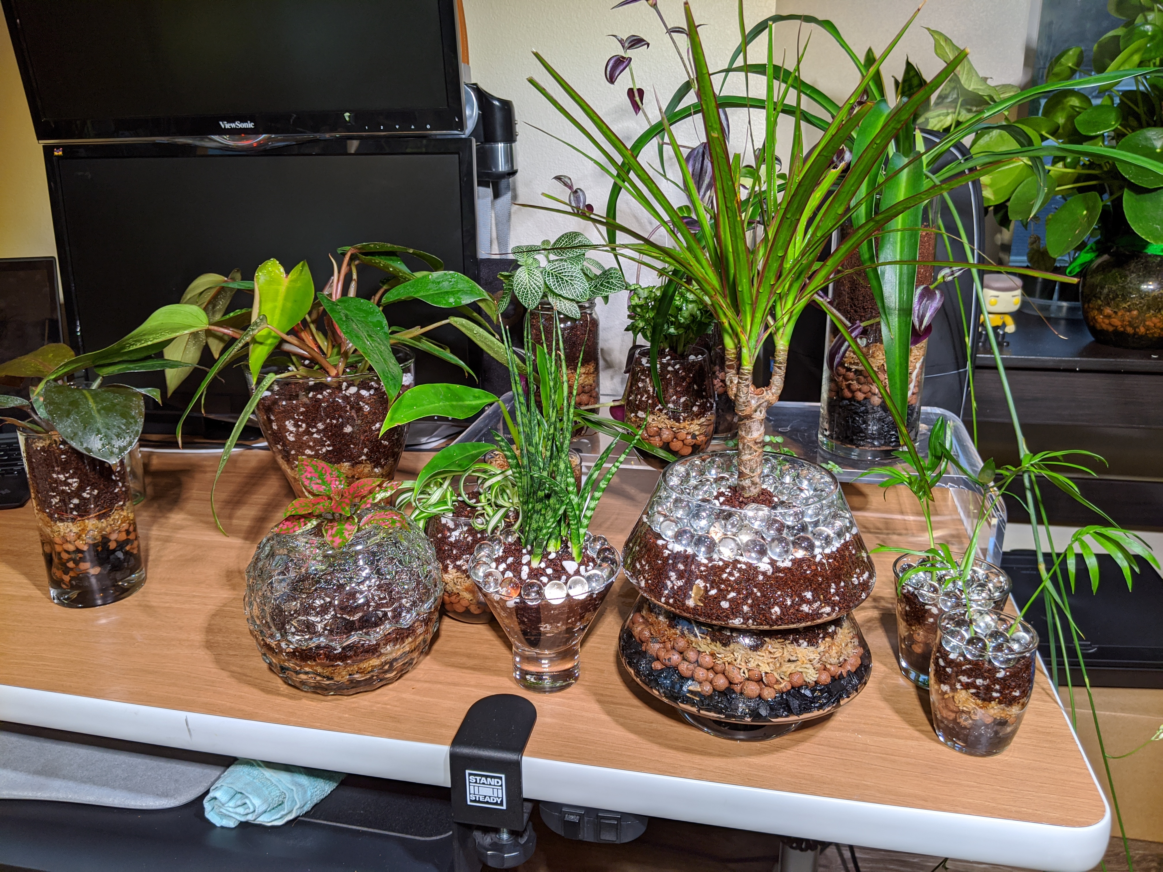 Collection of plants in glass pots