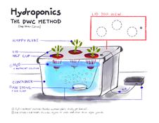 DWC Hydroponics Illustration by Tricia Mendoza Johnston
