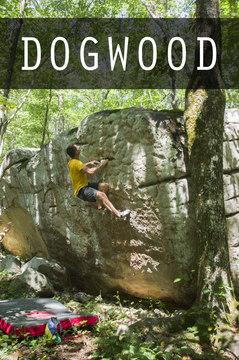 Dogwood cover