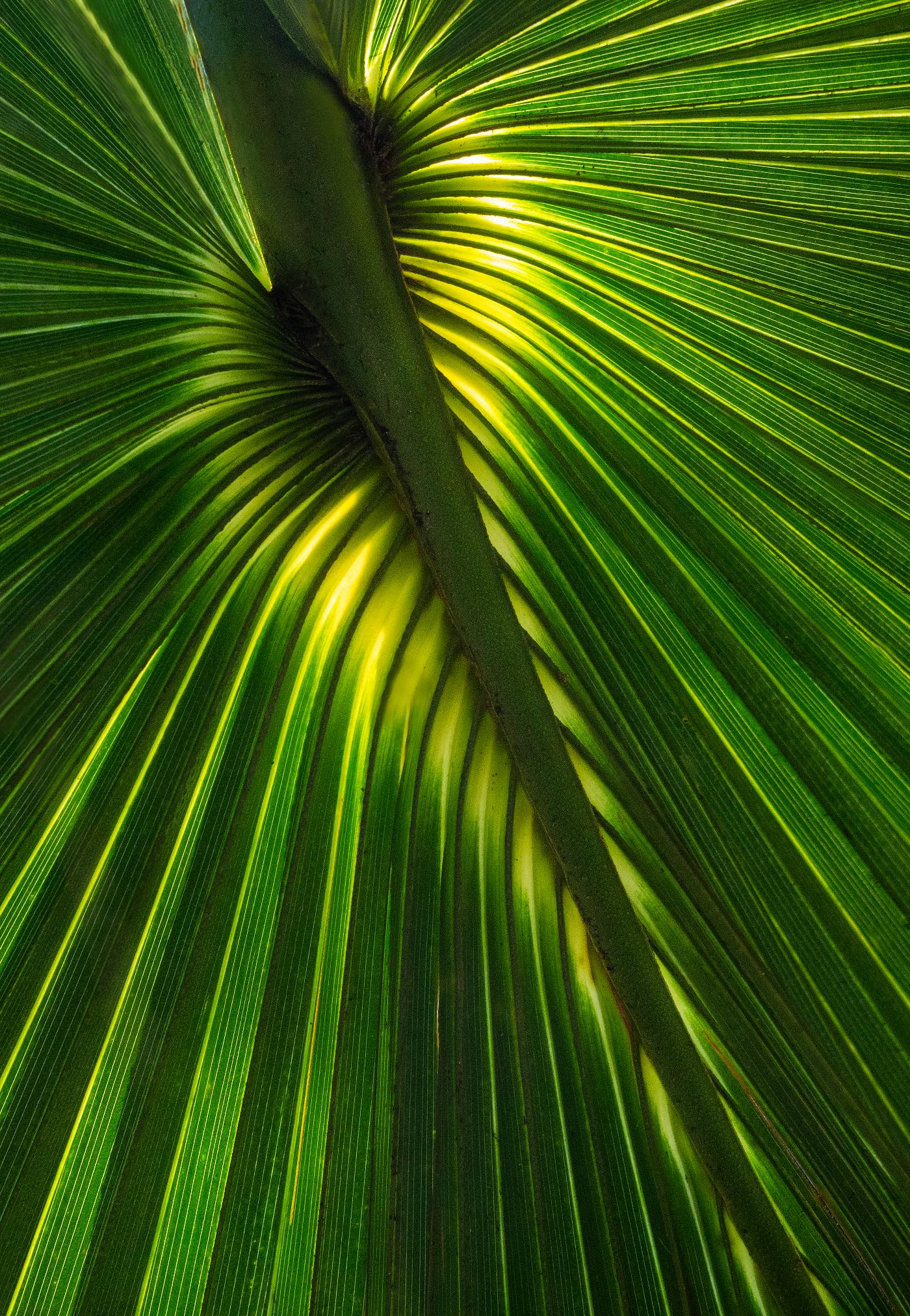 Palm Psalm