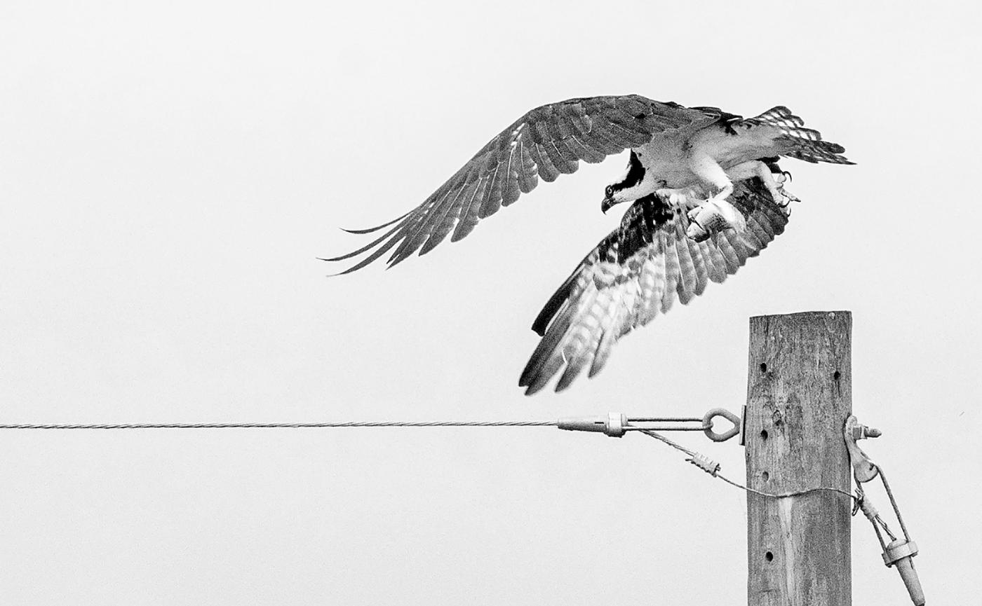 Angel Of Death (Osprey)