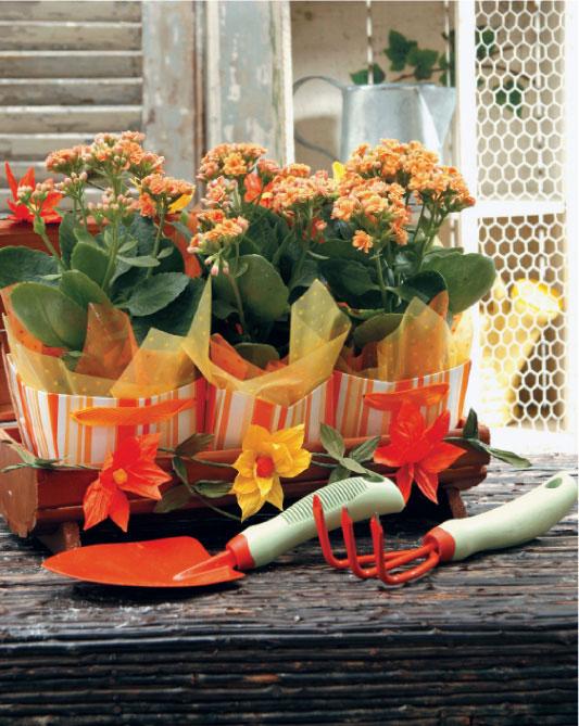 Flores com embalagens