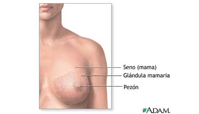 ¿6x1? #5: ¿Los pechos son un órgano sexual? - 6