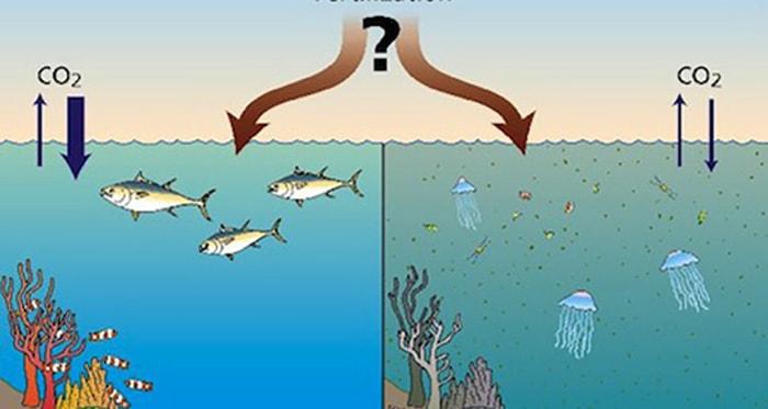 Acidificación de los océanos - 1