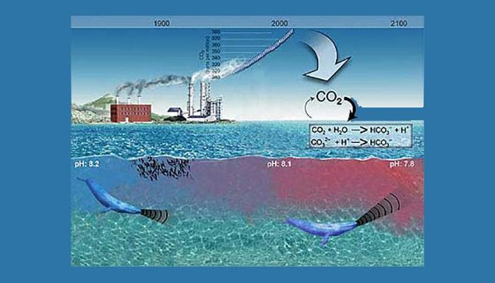 Acidificación de los océanos - 2