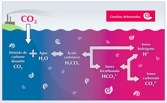 Acidificación de los océanos - 4