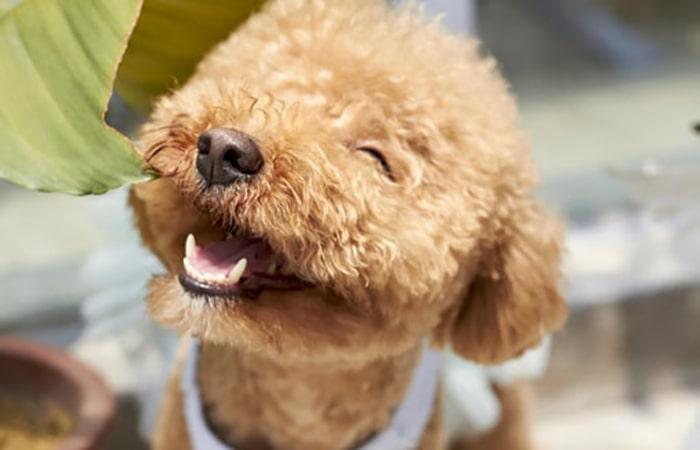 ¿Cómo actúa la sonrisa en nuestra felicidad? - 3