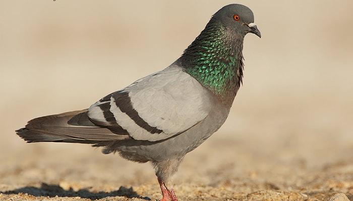¿Cómo se orientan las aves? - 4