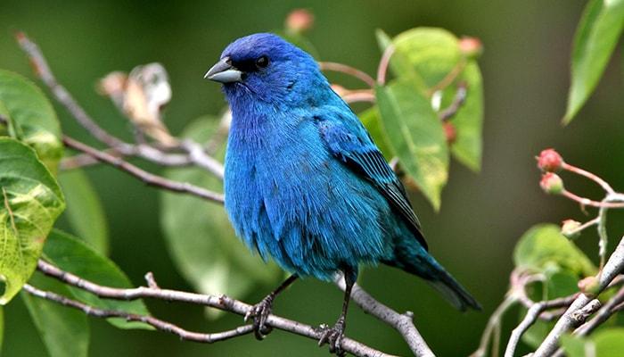 ¿Cómo se orientan las aves? - 5