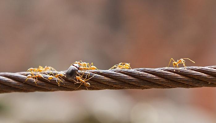 Teoría de Cuerdas - 3