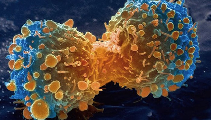 ¿Cómo funciona el cáncer? - 2
