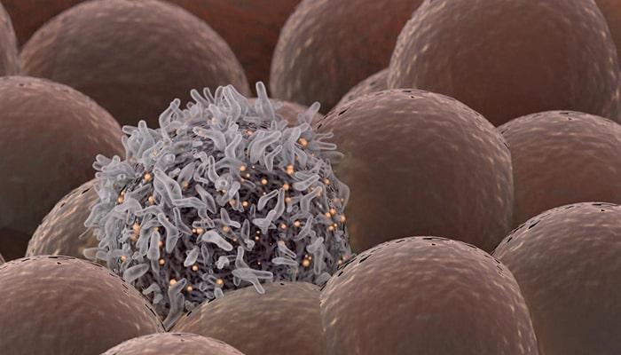 ¿Cómo funciona el cáncer? - 5