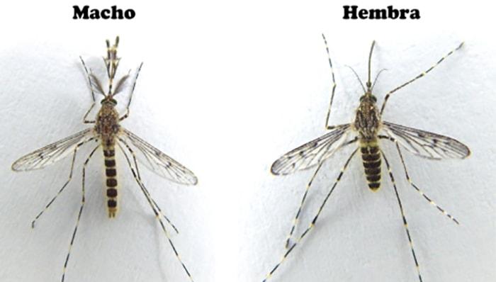 9 cosas que quizás no sabías de los mosquitos - 3