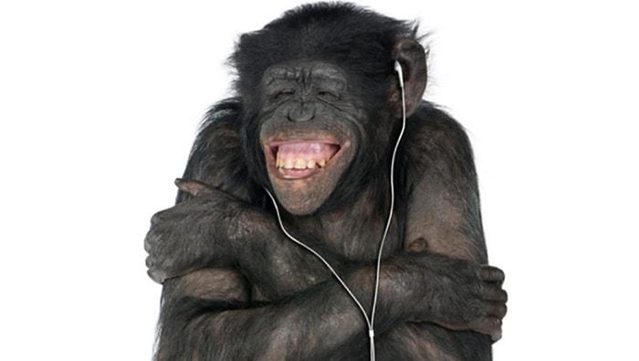 A los animales, ¿les gusta la música? - 2