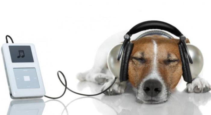 A los animales, ¿les gusta la música? - 3