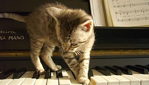 A los animales, ¿les gusta la música? - 4
