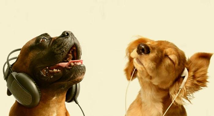 A los animales, ¿les gusta la música? - 5