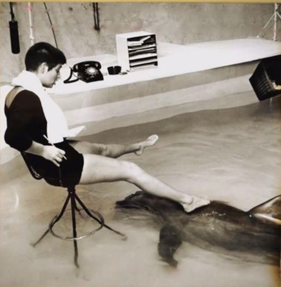 El delfín que se enamoró de su profesora de inglés - 2