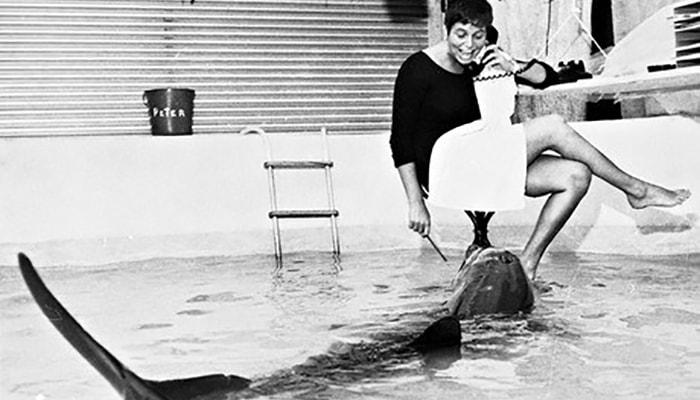 El delfín que se enamoró de su profesora de inglés - 3