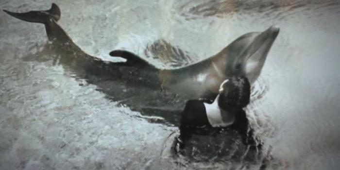 El delfín que se enamoró de su profesora de inglés - 5