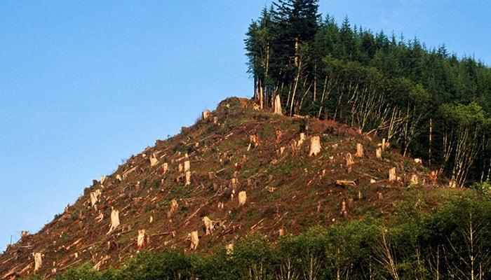 La evolución de la deforestación en los últimos siglos - 1