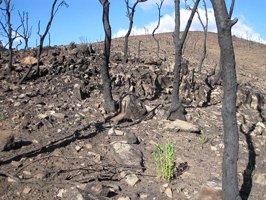 La evolución de la deforestación en los últimos siglos - 3