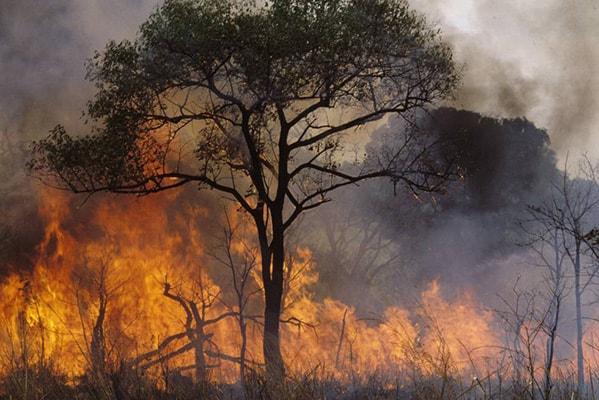 La evolución de la deforestación en los últimos siglos - 4