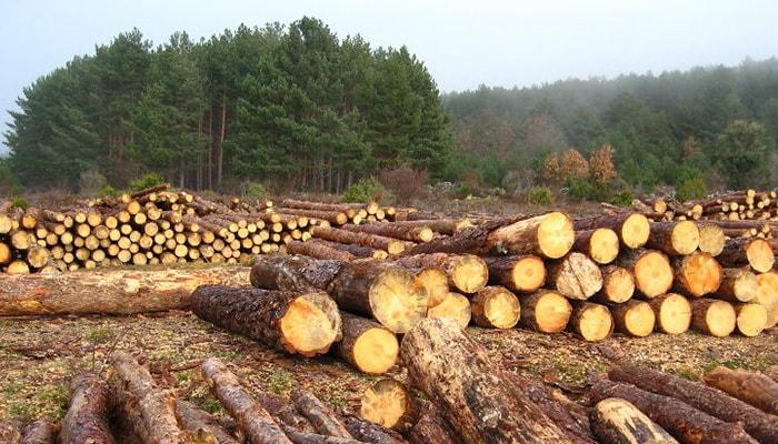 La evolución de la deforestación en los últimos siglos - 6