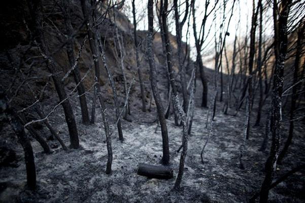 La evolución de la deforestación en los últimos siglos - 7
