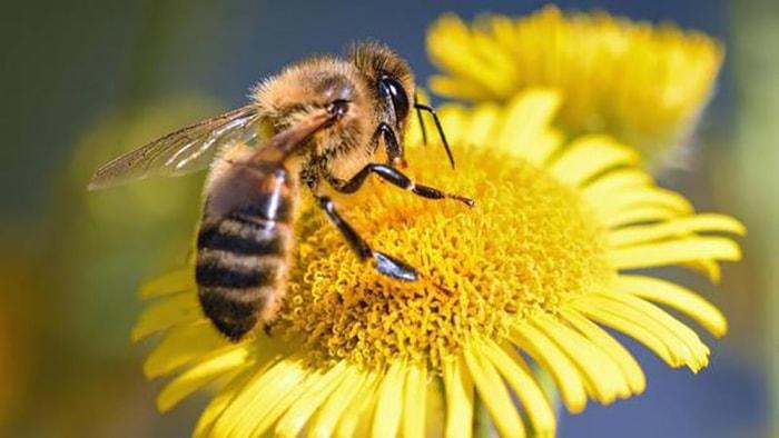 Las abejas y su importancia en el mundo - 3