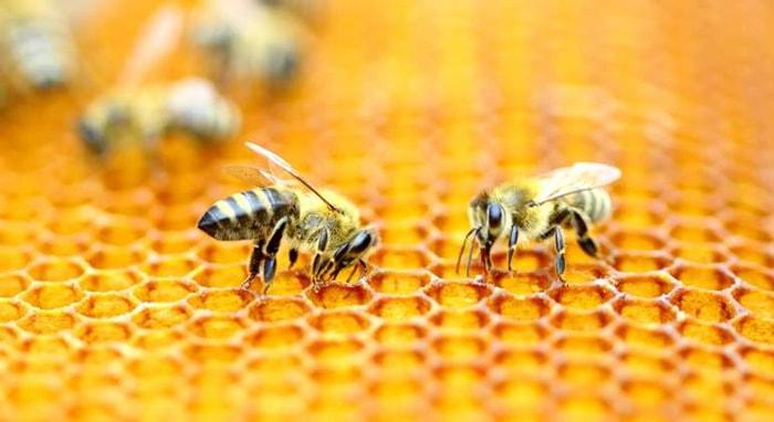 Las abejas y su importancia en el mundo - 4